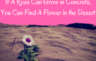 if-a-rose-can-grow